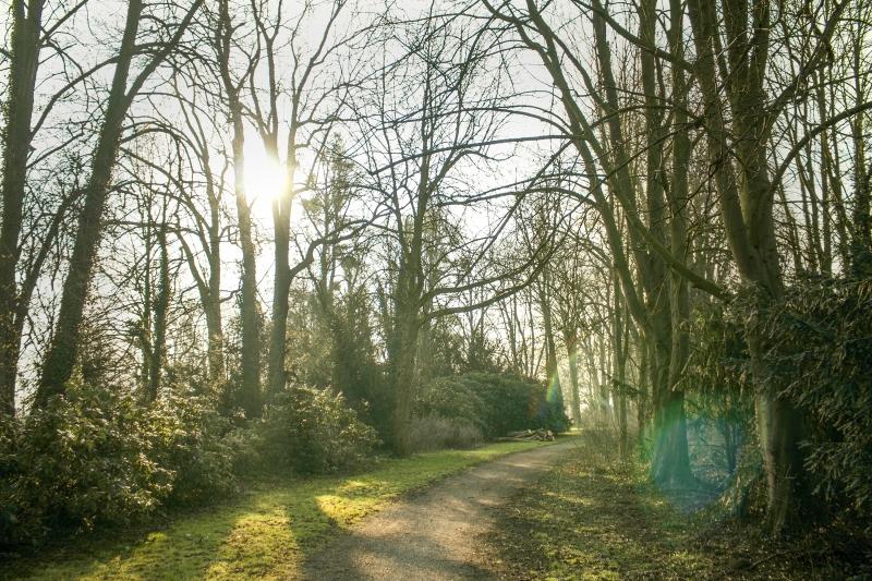 Grohnder Schlosspark am Morgen, kostenloses Hintergrundbild von Blickwinkel Fotografie Vanessa von Wieding in Emmerthal bei Hameln