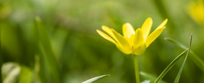 Kostenloses Hintergrundbild von Blickwinkel Fotografie Vanessa von Wieding in Emmerthal bei Hameln: eine Blume